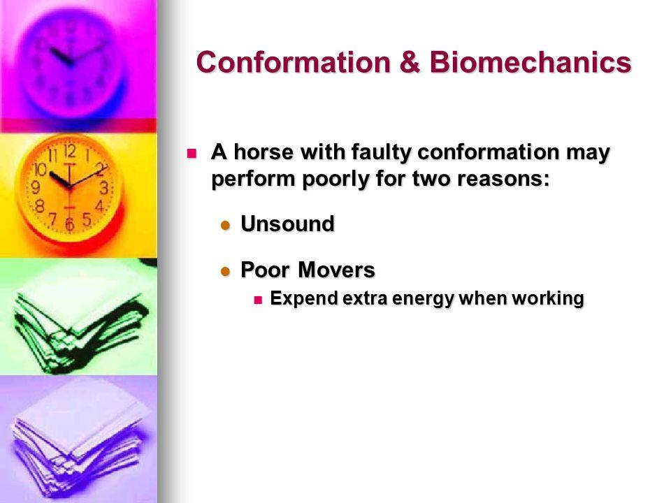 Conformation & Biomechanics
