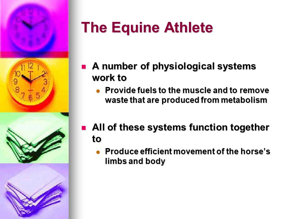 The Equine Athlete A number of physiological systems work to