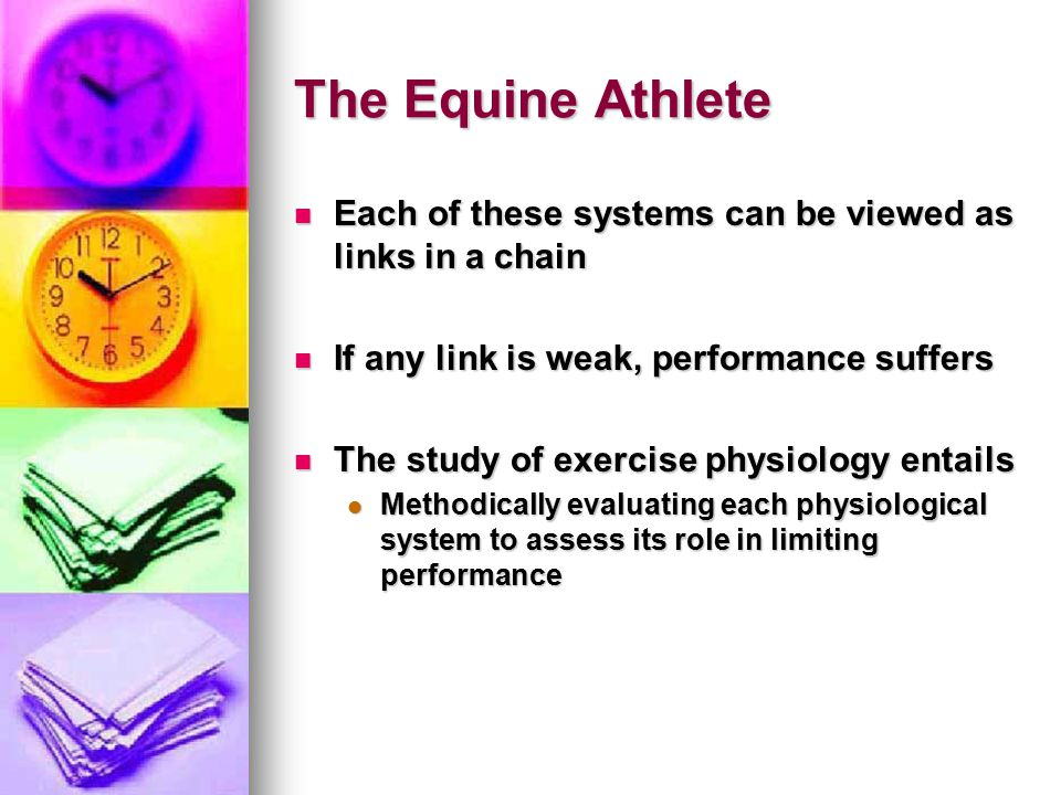 The Equine Athlete Each of these systems can be viewed as links in a chain. If any link is weak, performance suffers.