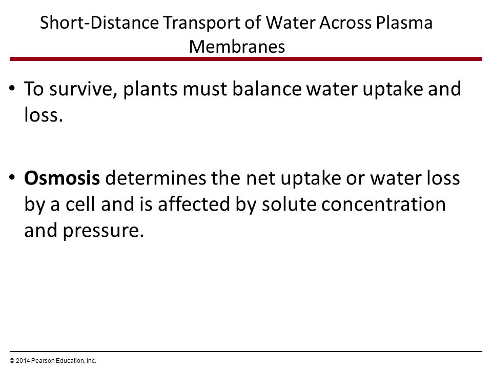 Short-Distance Transport of Water Across Plasma Membranes