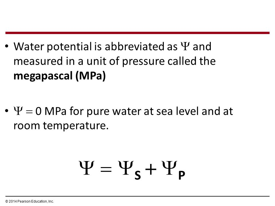 Water potential is abbreviated as  and measured in a unit of pressure called the megapascal (MPa)