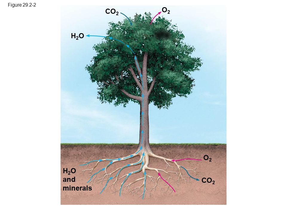O2 CO2 H2O O2 H2O and minerals CO2 Figure 29.2-2