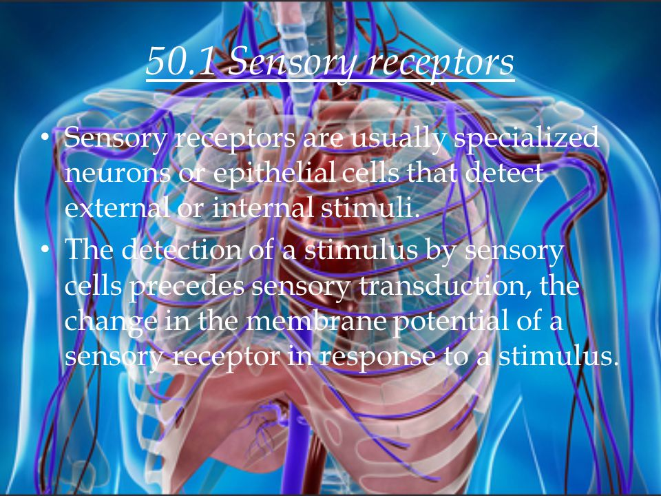 50.1 Sensory receptors Sensory receptors are usually specialized neurons or epithelial cells that detect external or internal stimuli.