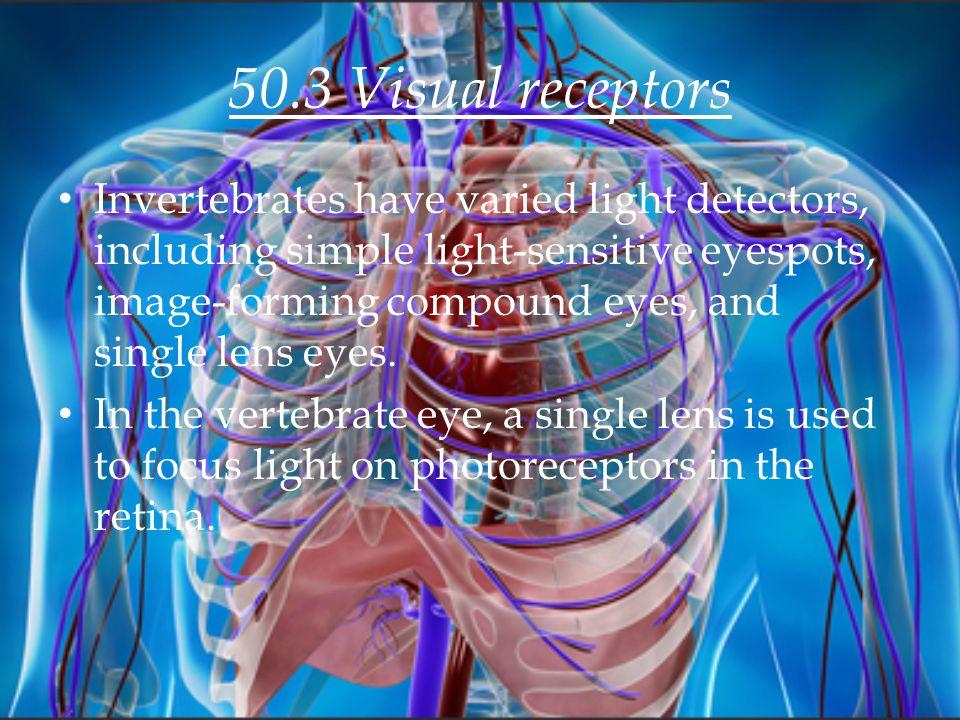 50.3 Visual receptors