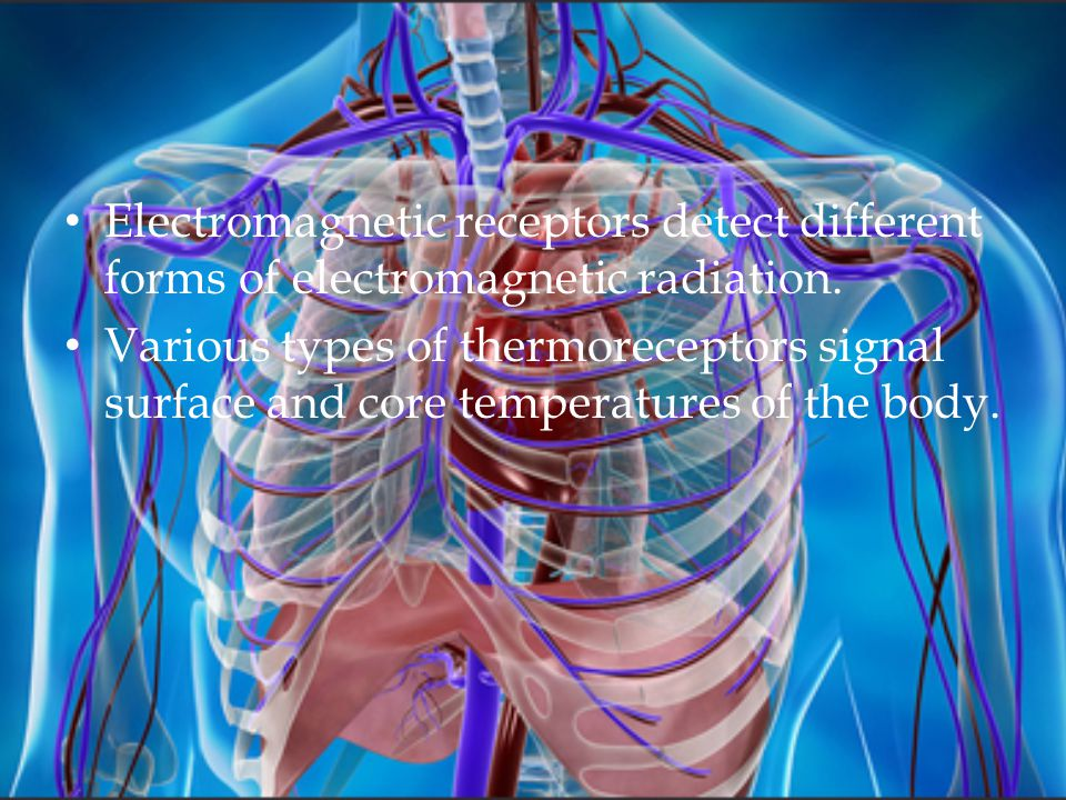 Electromagnetic receptors detect different forms of electromagnetic radiation.