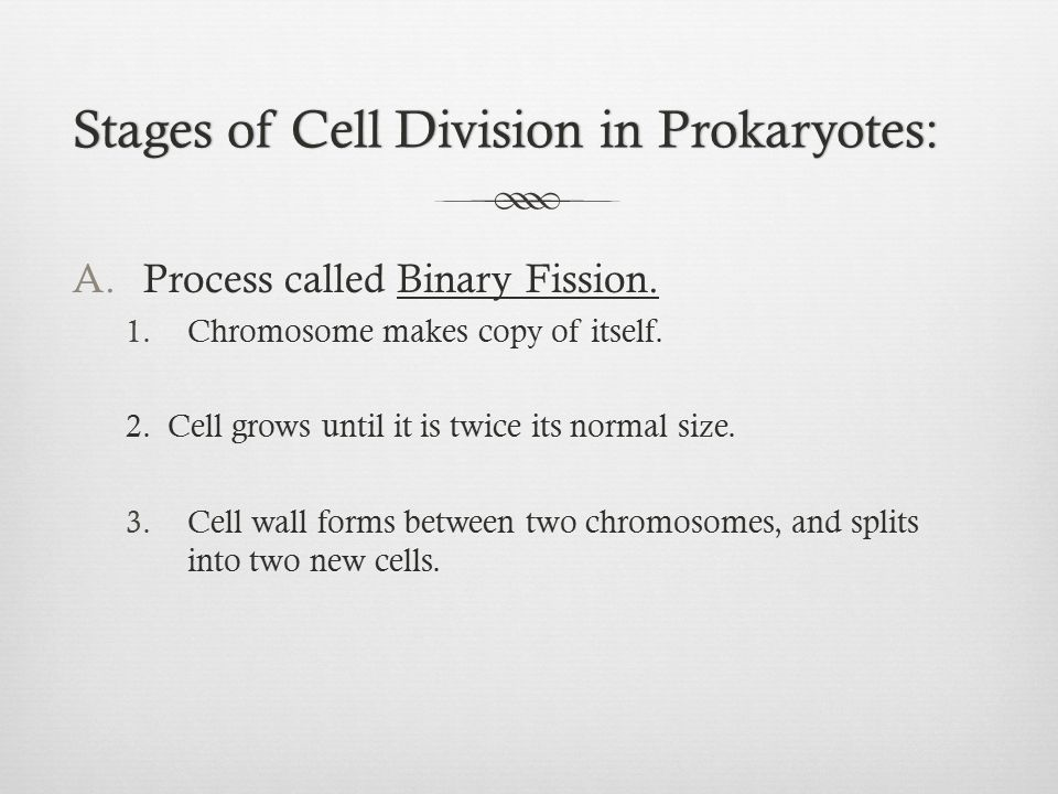 Stages of Cell Division in Prokaryotes: