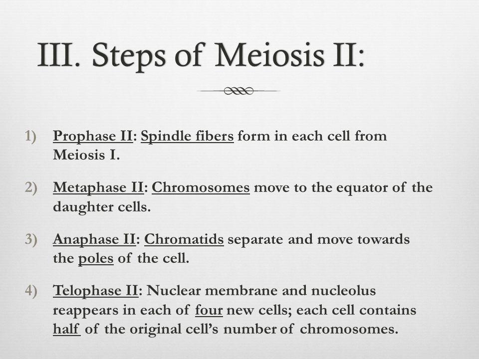III. Steps of Meiosis II: