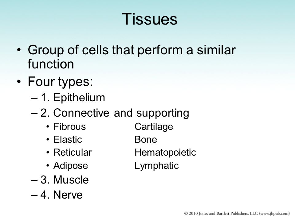 Tissues Group of cells that perform a similar function Four types: