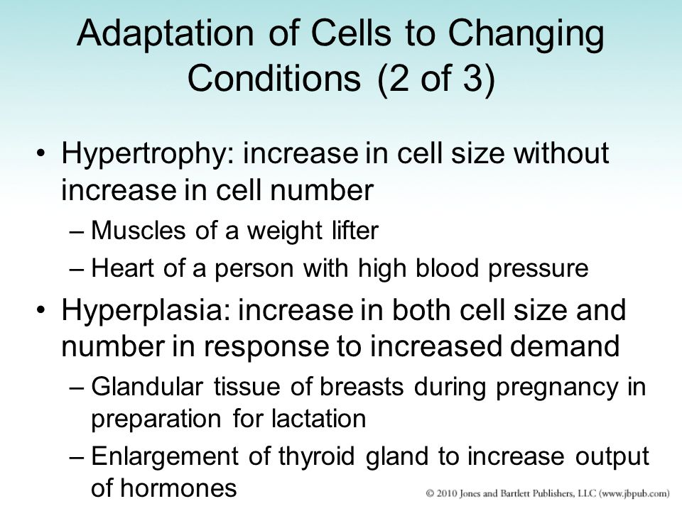 Adaptation of Cells to Changing Conditions (2 of 3)