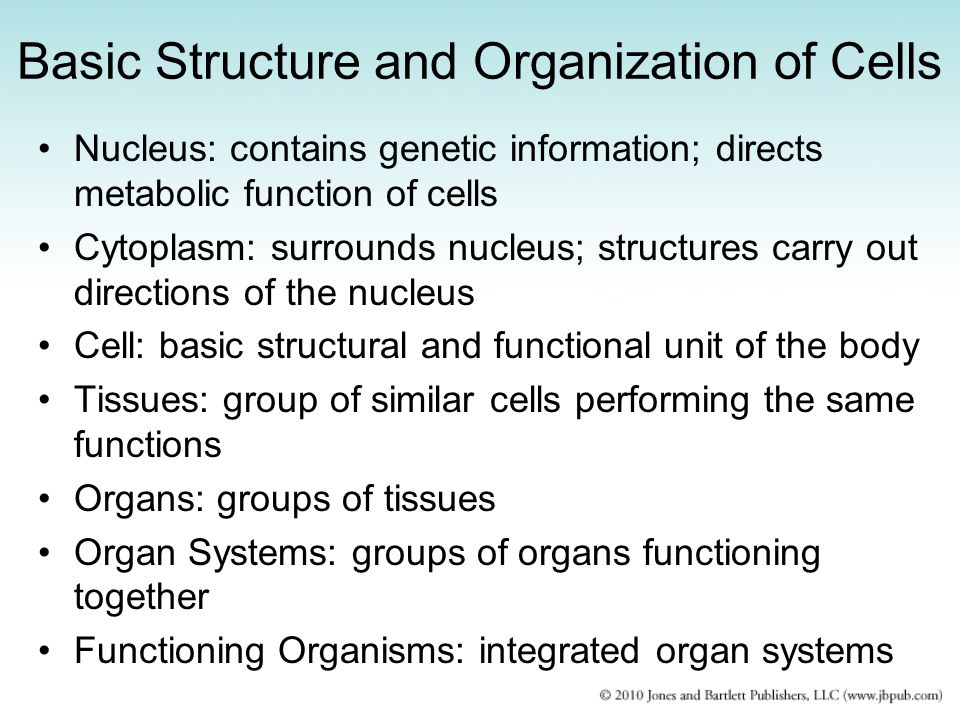 Basic Structure and Organization of Cells
