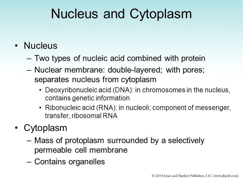 Nucleus and Cytoplasm Nucleus Cytoplasm