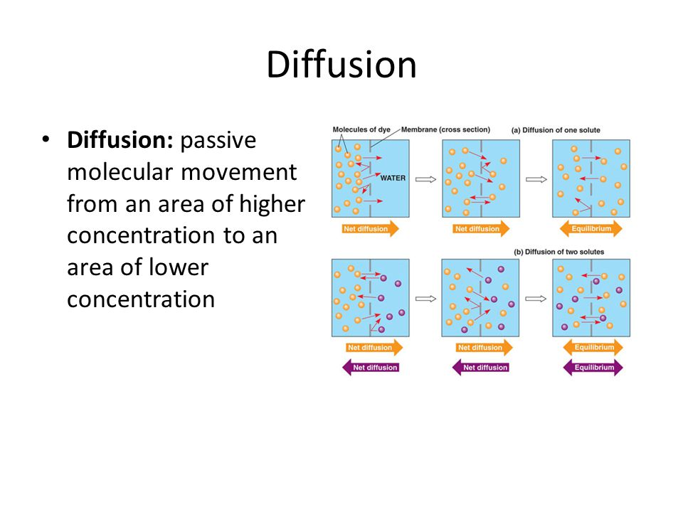 Diffusion Diffusion: passive molecular movement from an area of higher concentration to an area of lower concentration.