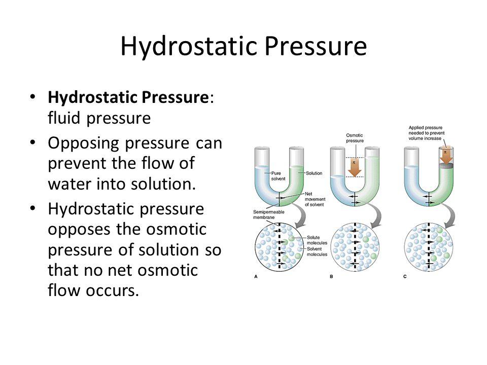 Hydrostatic Pressure Hydrostatic Pressure: fluid pressure