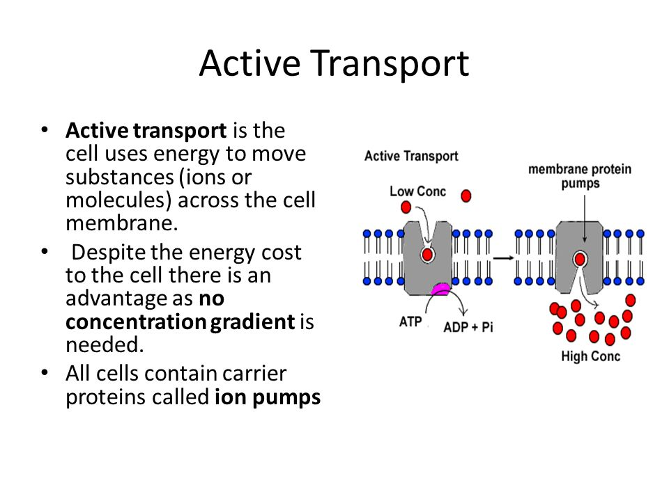 Active Transport Active transport is the cell uses energy to move substances (ions or molecules) across the cell membrane.