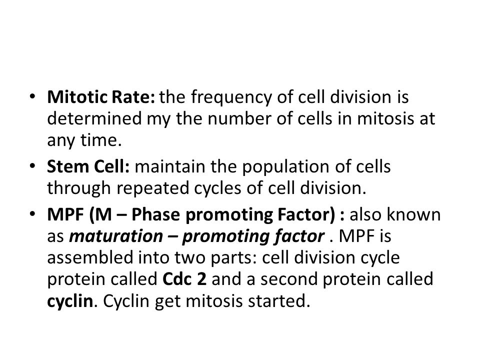 Mitotic Rate: the frequency of cell division is determined my the number of cells in mitosis at any time.