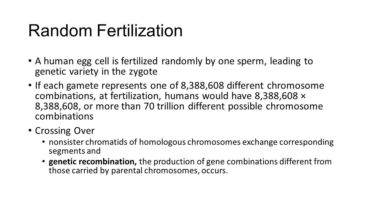 Random Fertilization A human egg cell is fertilized randomly by one sperm, leading to genetic variety in the zygote.