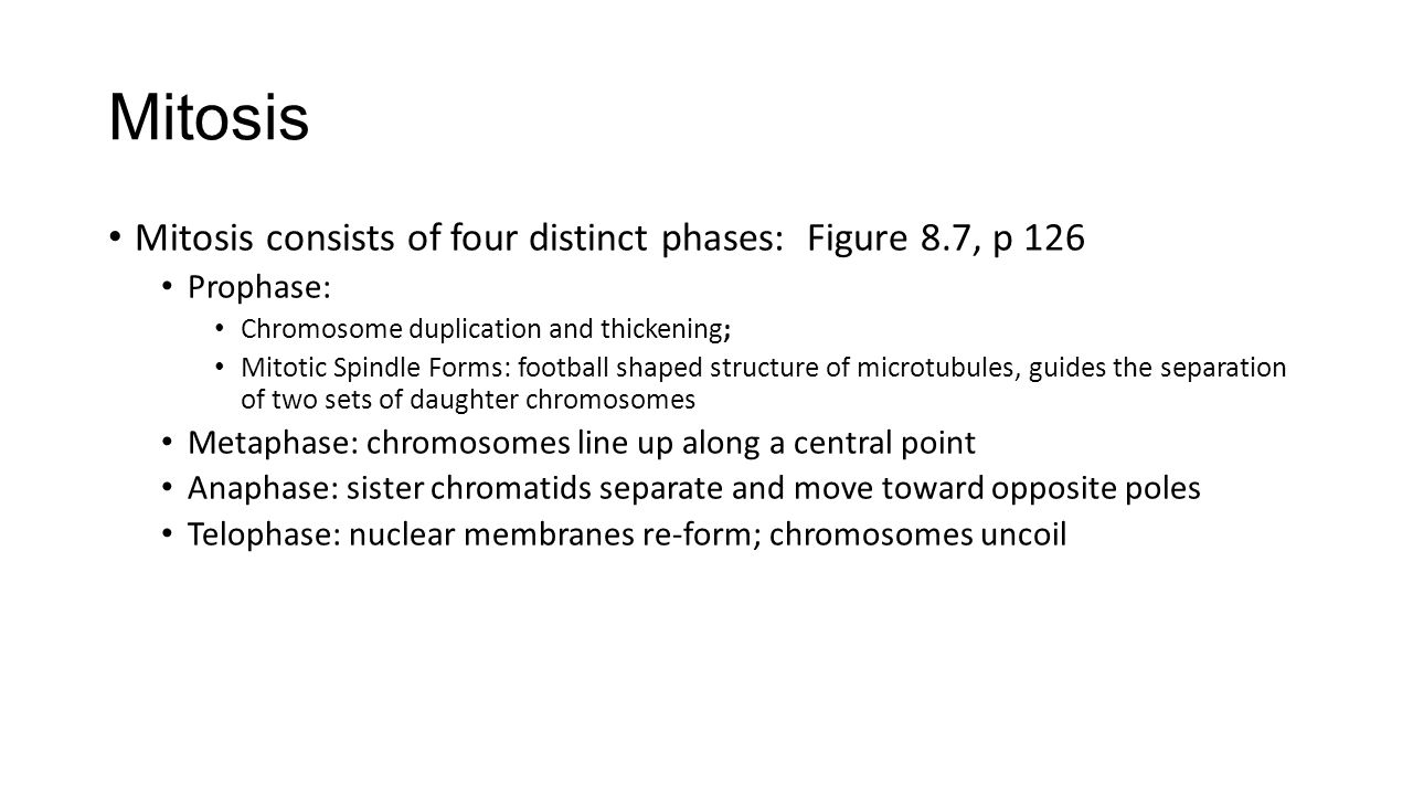 Mitosis Mitosis consists of four distinct phases: Figure 8.7, p 126