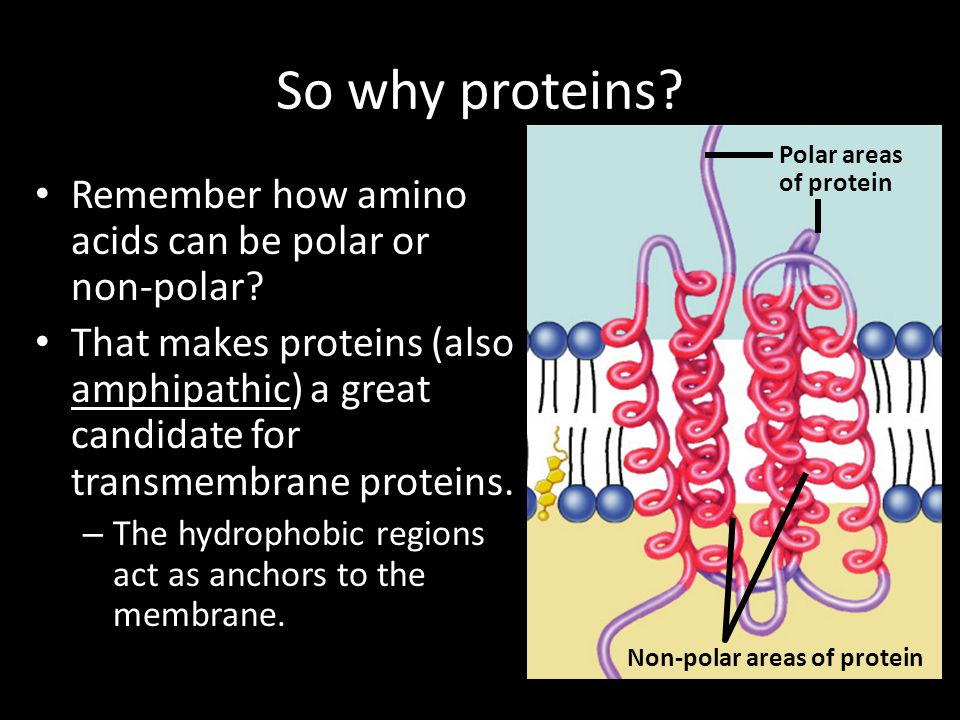 Non-polar areas of protein