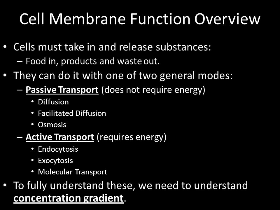 Cell Membrane Function Overview