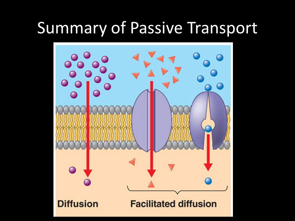 Summary of Passive Transport
