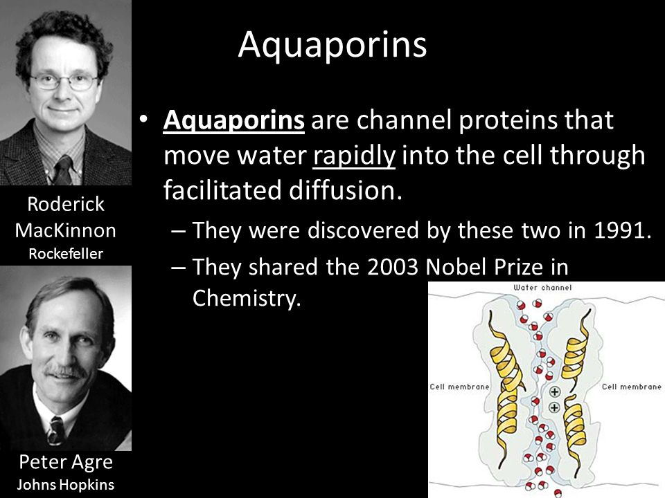 Aquaporins Aquaporins are channel proteins that move water rapidly into the cell through facilitated diffusion.