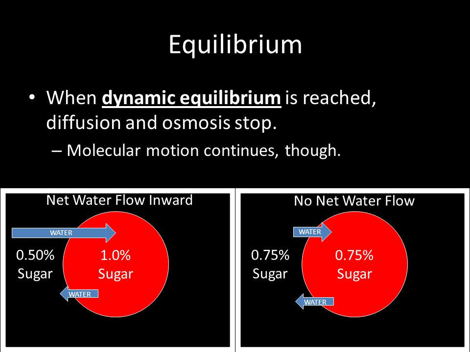 Equilibrium When dynamic equilibrium is reached, diffusion and osmosis stop. Molecular motion continues, though.