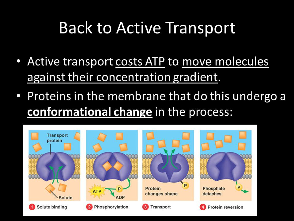 Back to Active Transport