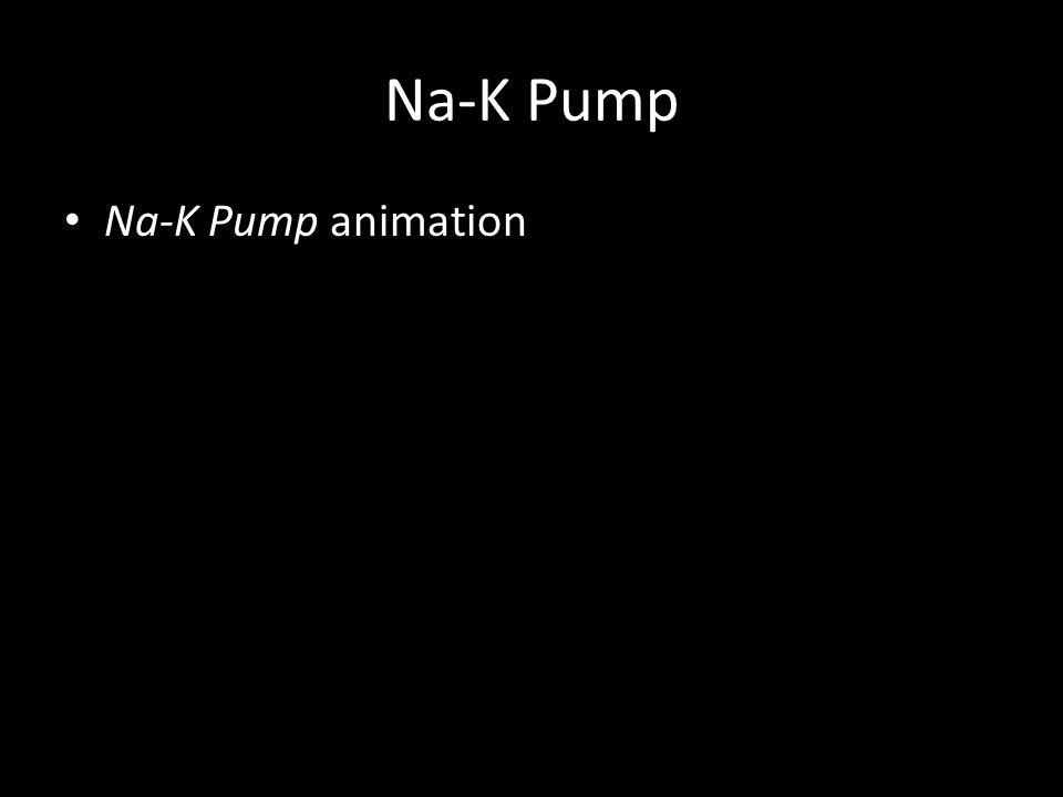 Na-K Pump Na-K Pump animation