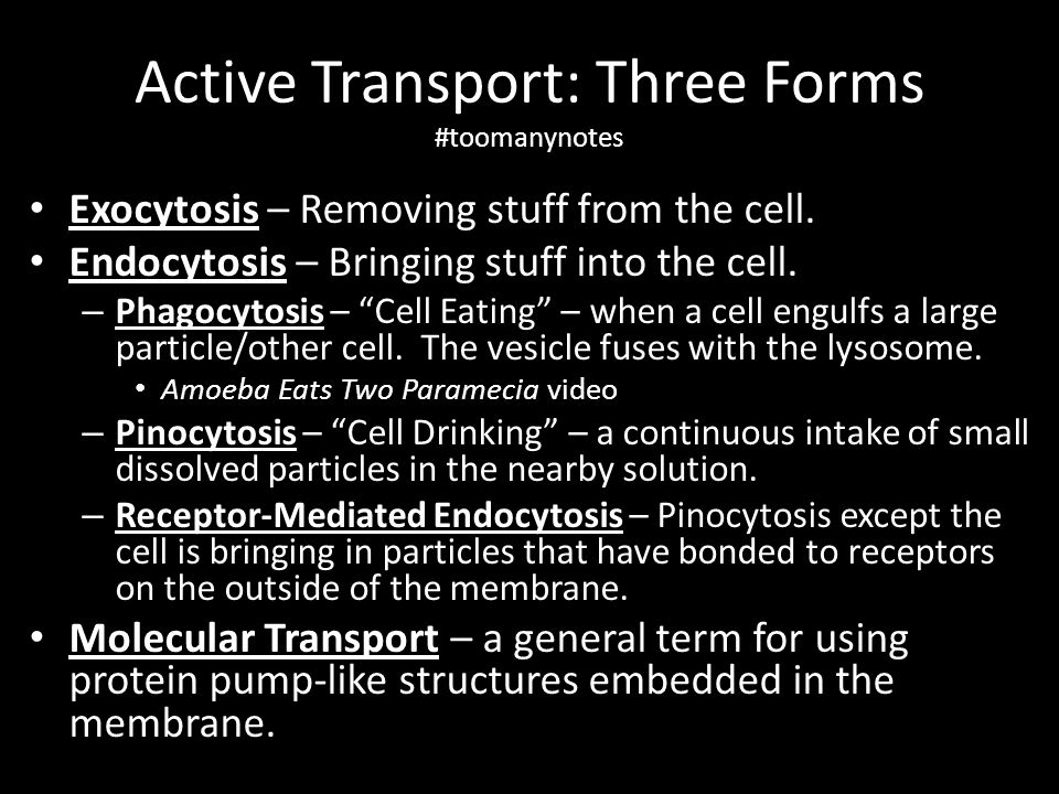 Active Transport: Three Forms #toomanynotes