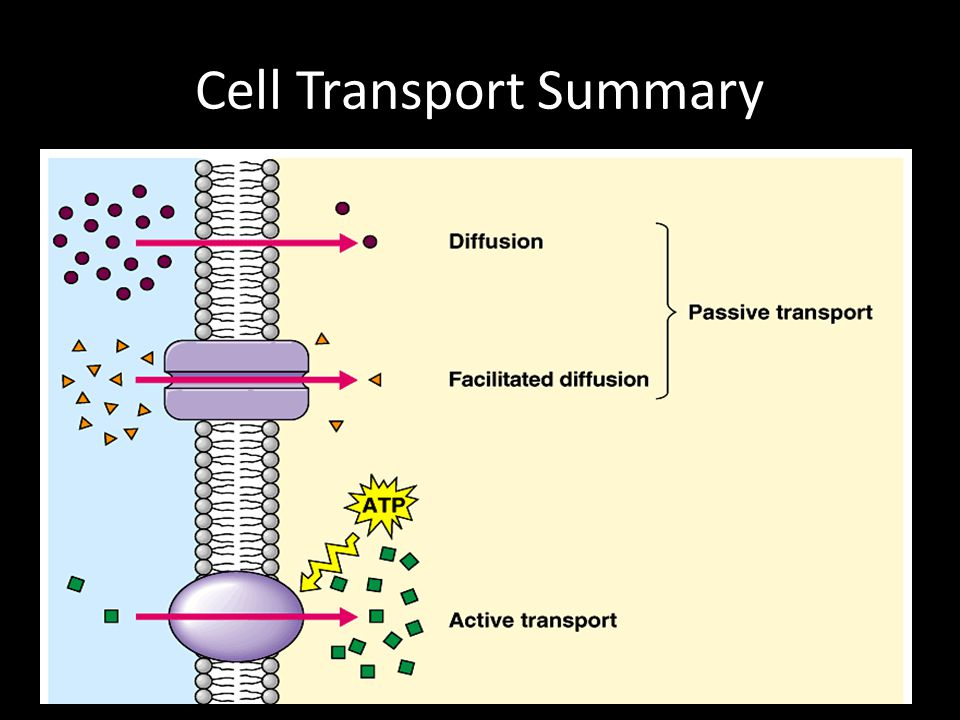 Cell Transport Summary
