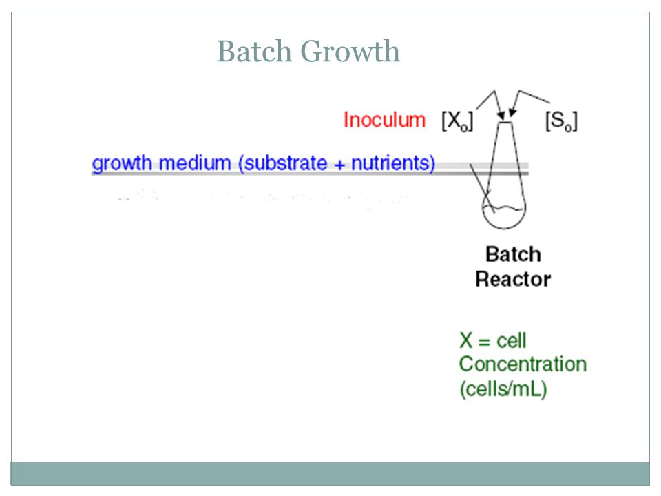 Batch Growth