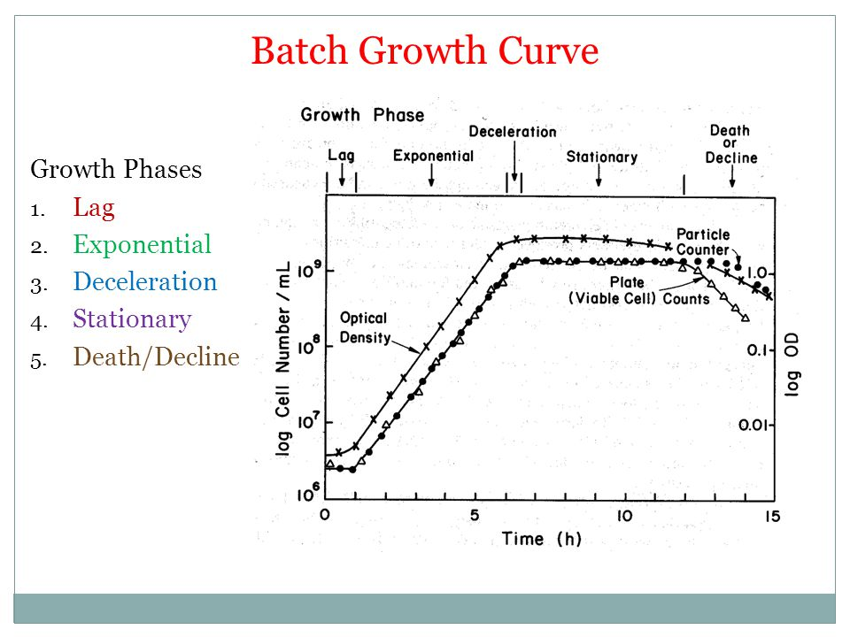 Batch Growth Curve Growth Phases Lag Exponential Deceleration