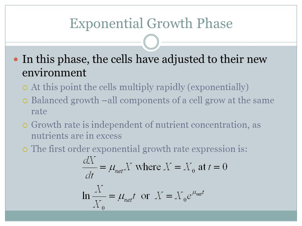 Exponential Growth Phase