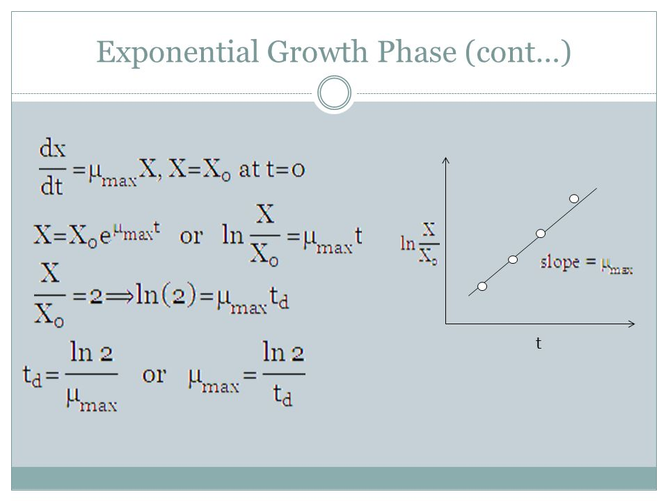 Exponential Growth Phase (cont…)