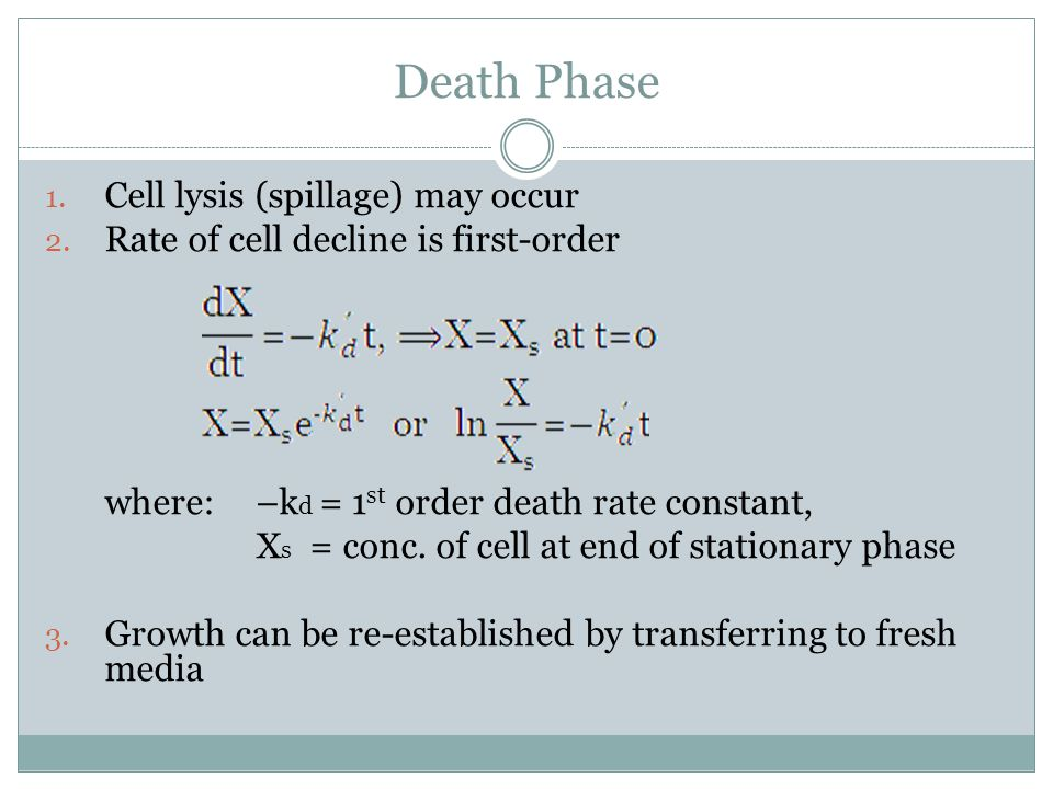 Death Phase Cell lysis (spillage) may occur