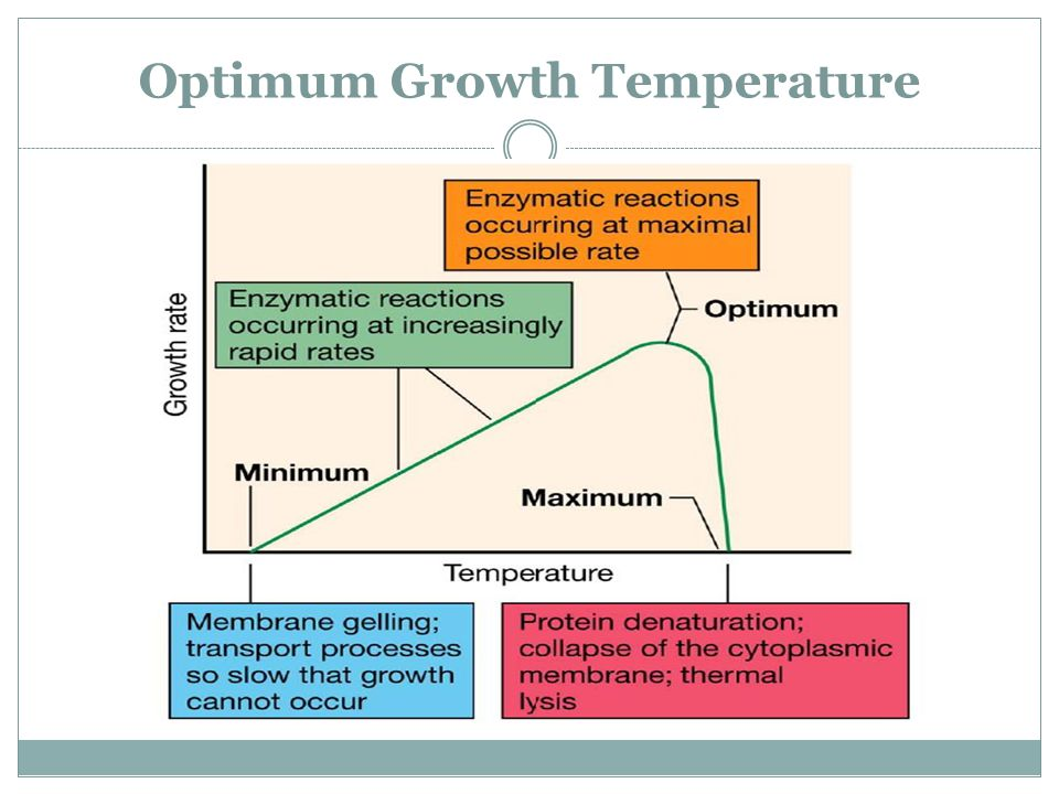 Optimum Growth Temperature