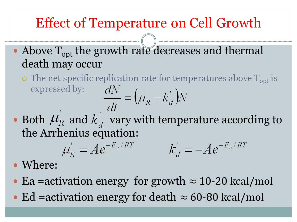 Effect of Temperature on Cell Growth