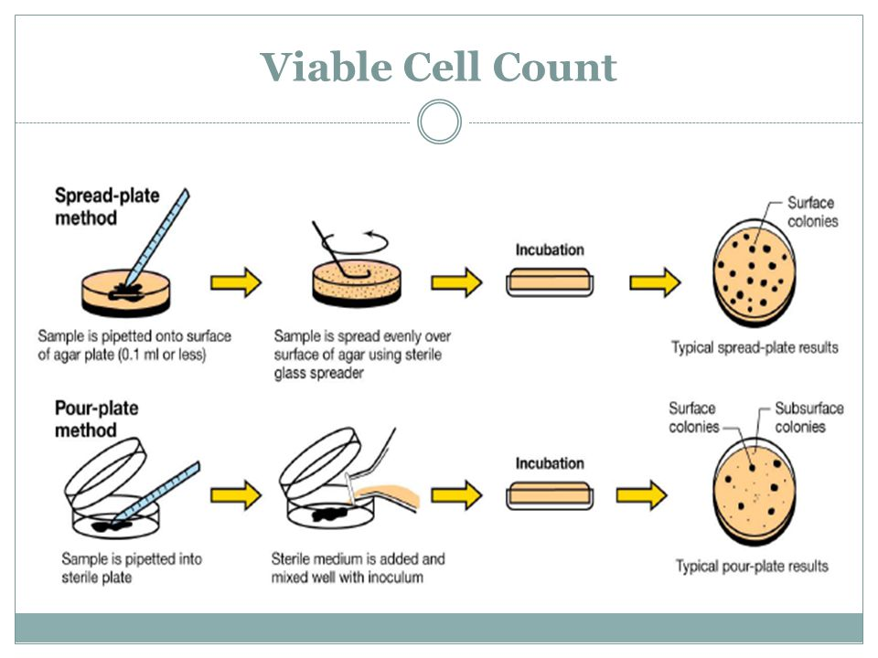 Viable Cell Count