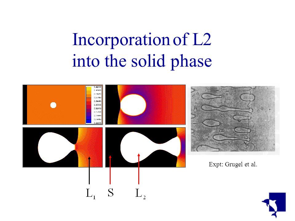 Incorporation of L2 into the solid phase