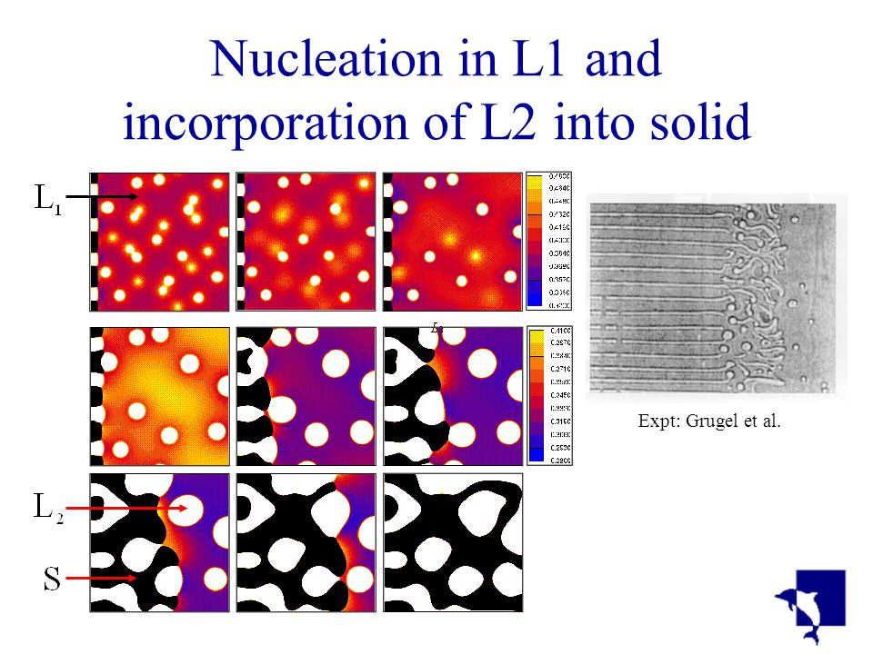 Nucleation in L1 and incorporation of L2 into solid