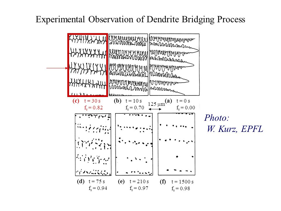 Experimental Observation of Dendrite Bridging Process