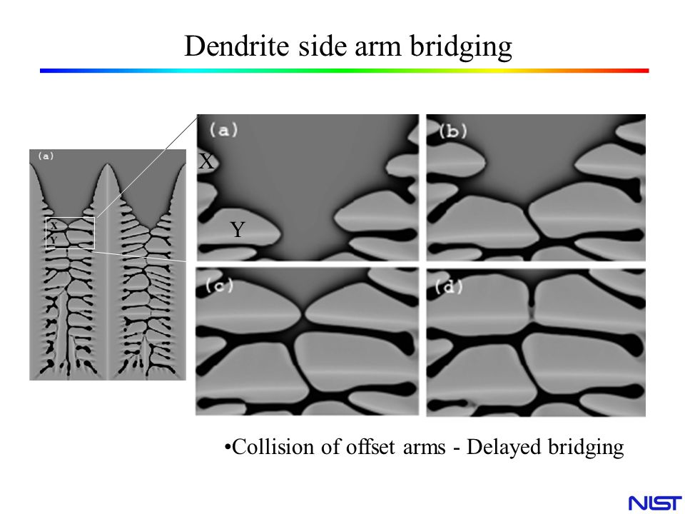 Dendrite side arm bridging
