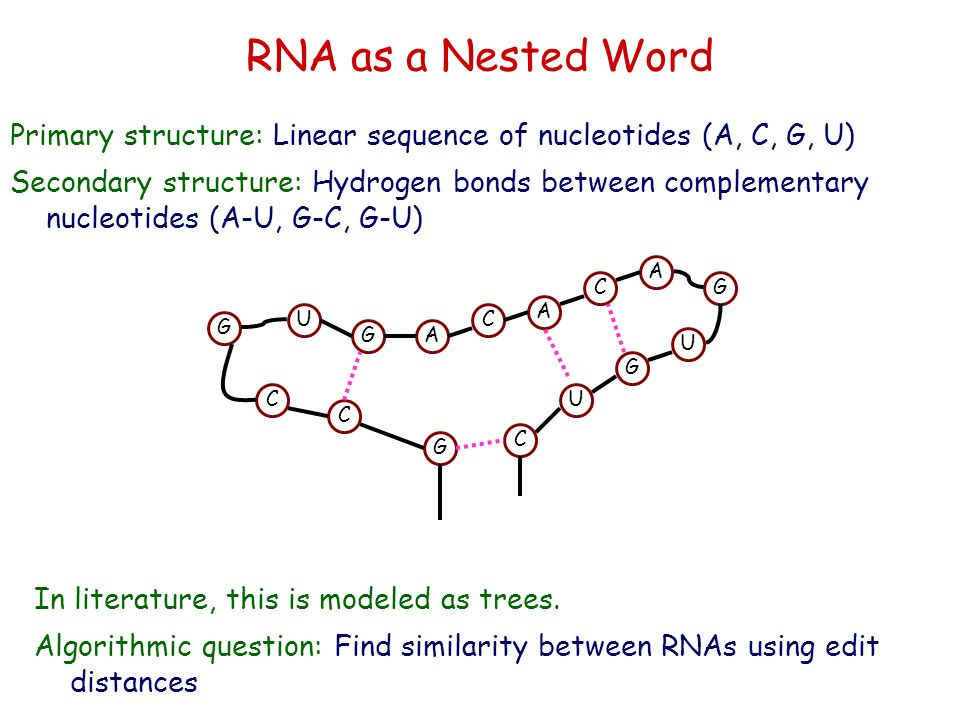 RNA as a Nested Word Primary structure: Linear sequence of nucleotides (A, C, G, U)