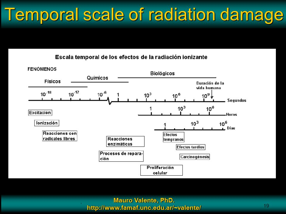 Temporal scale of radiation damage