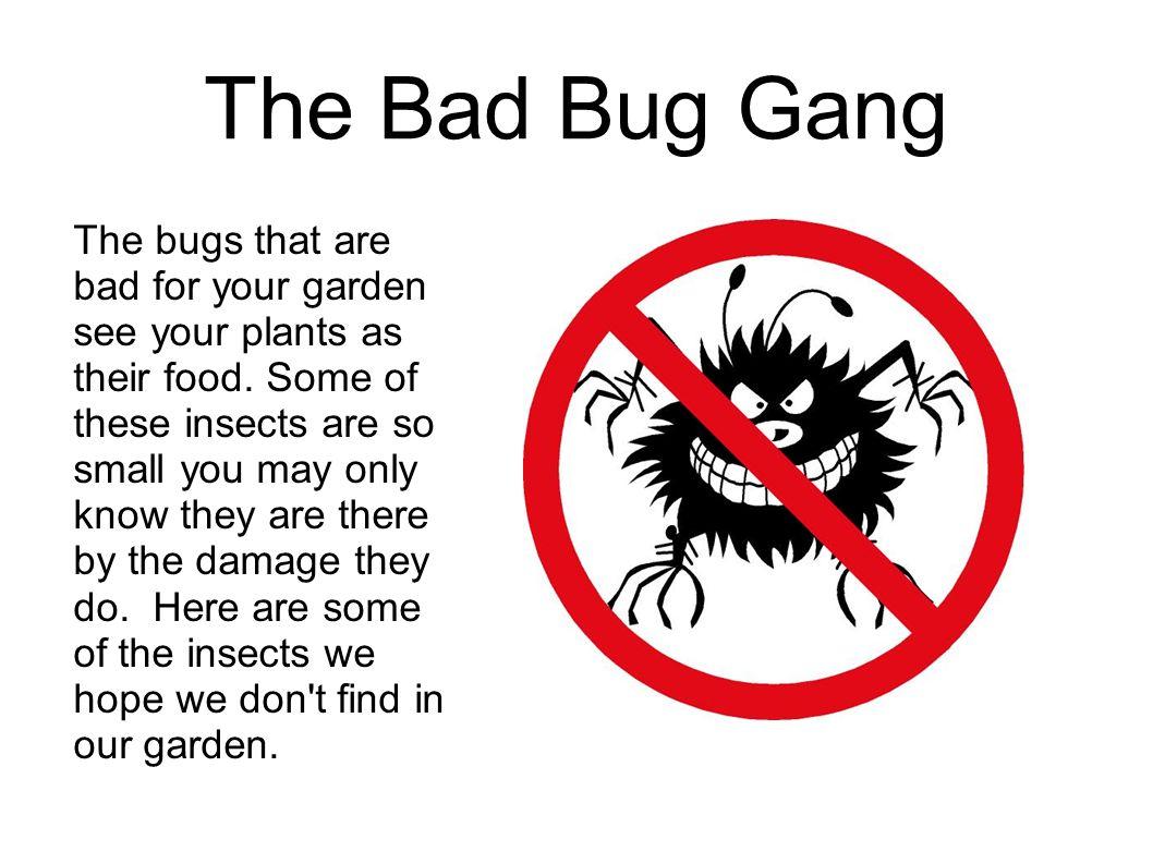 The Bad Bug Gang