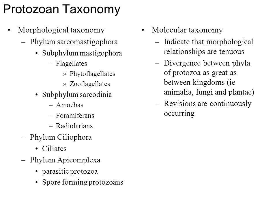 Protozoan Taxonomy Morphological taxonomy Molecular taxonomy