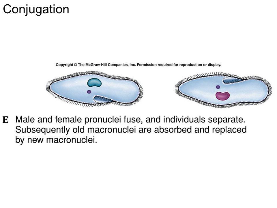 Conjugation Fig. 11.23e