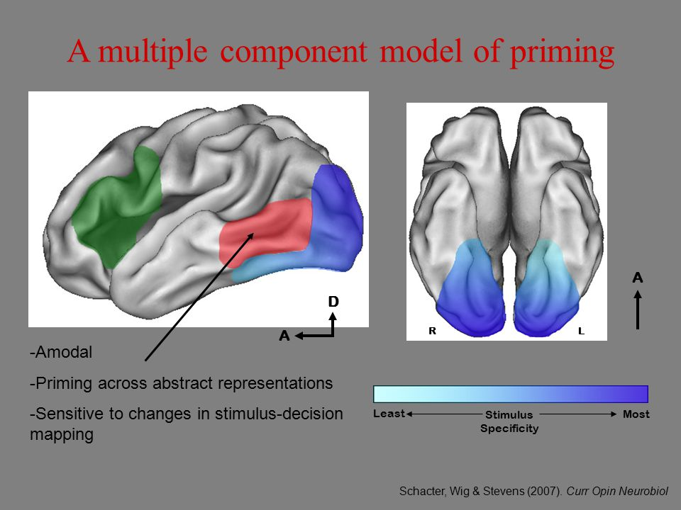 A multiple component model of priming