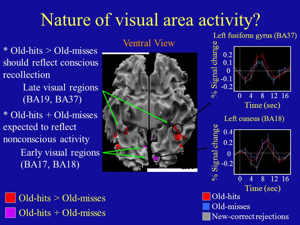 Nature of visual area activity