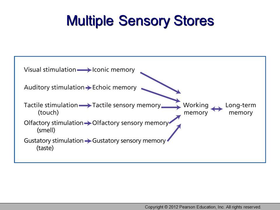 Multiple Sensory Stores